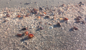 Highlights of Sanibel